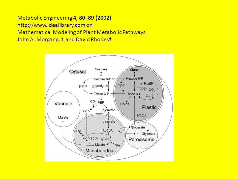 Metabolic Engineering 4, 80–89 (2002)