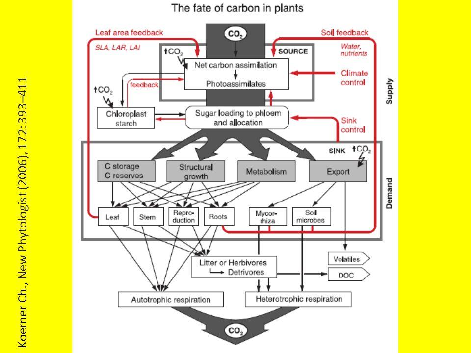Koerner Ch., New Phytologist (2006), 172: 393–411