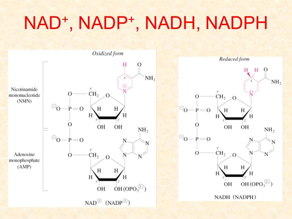 NAD+, NADP+, NADH, NADPH