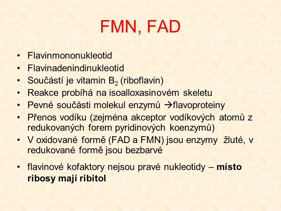 FMN, FAD Flavinmononukleotid Flavinadenindinukleotid