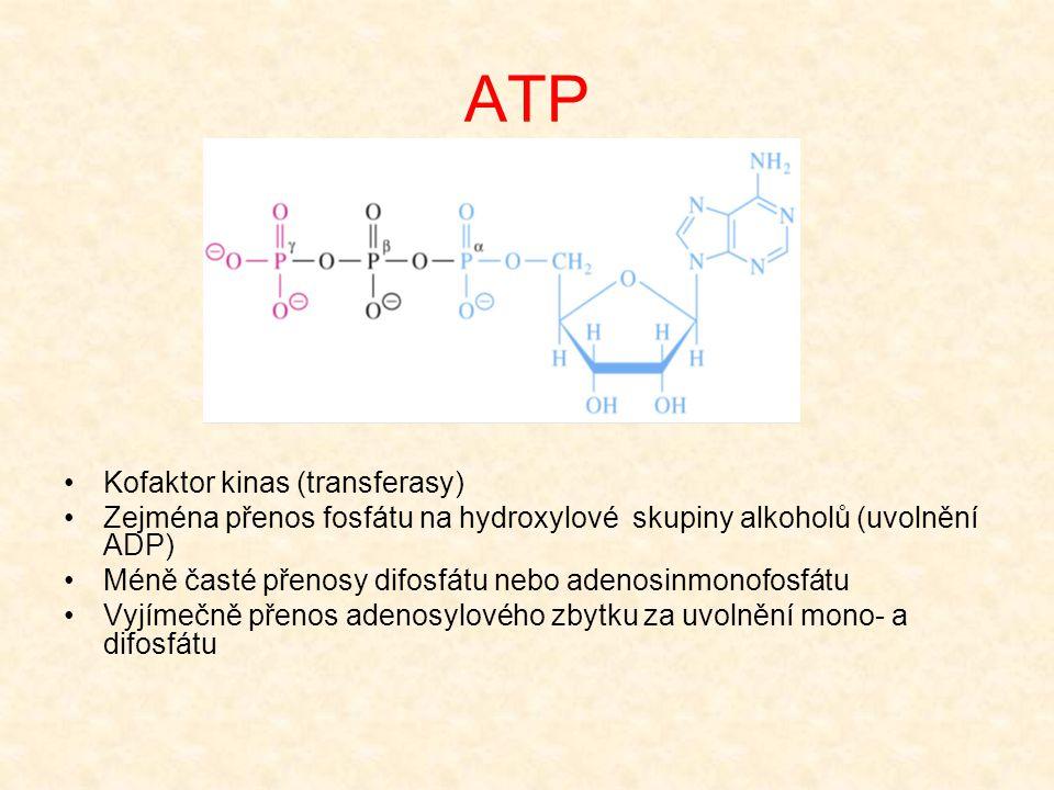 ATP Kofaktor kinas (transferasy)