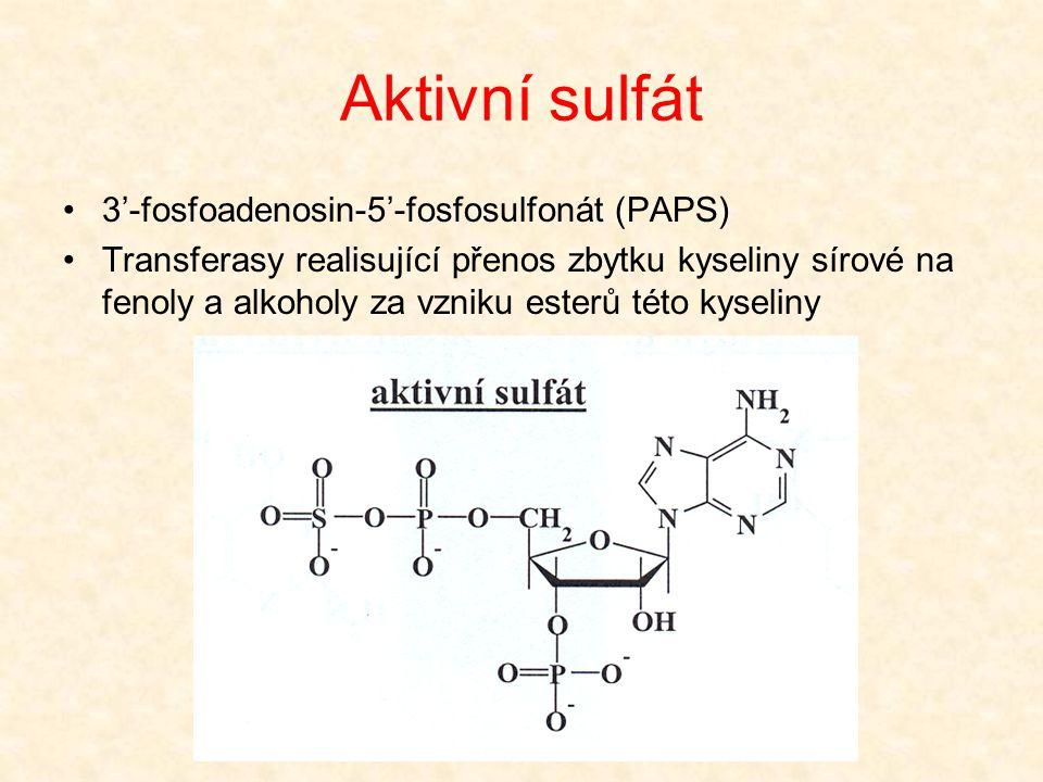 Aktivní sulfát 3'-fosfoadenosin-5'-fosfosulfonát (PAPS)