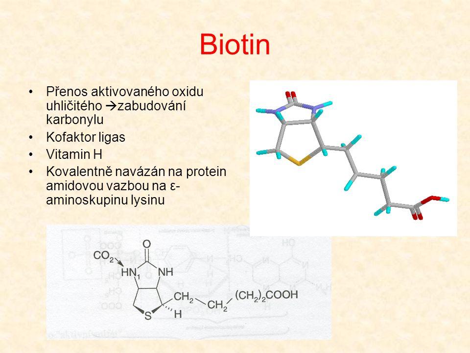 Biotin Přenos aktivovaného oxidu uhličitého zabudování karbonylu