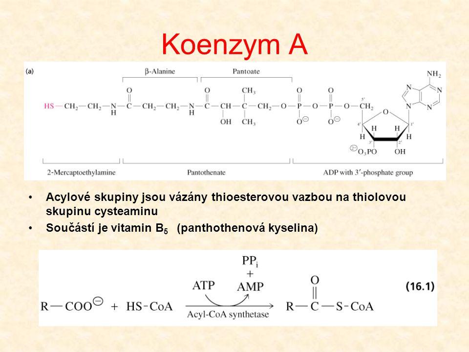 Koenzym A Acylové skupiny jsou vázány thioesterovou vazbou na thiolovou skupinu cysteaminu.