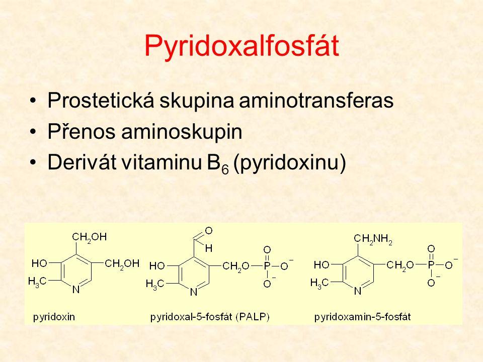 Pyridoxalfosfát Prostetická skupina aminotransferas Přenos aminoskupin