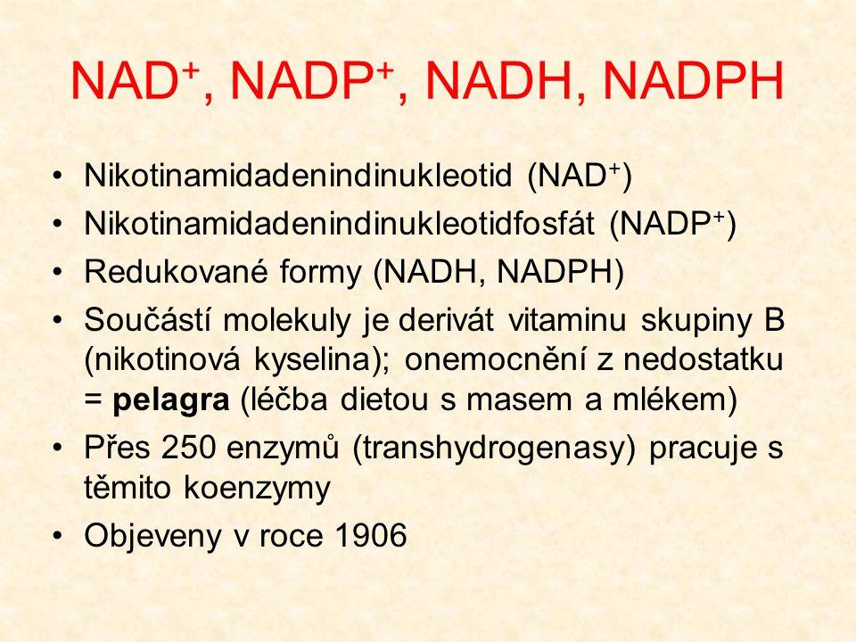NAD+, NADP+, NADH, NADPH Nikotinamidadenindinukleotid (NAD+)