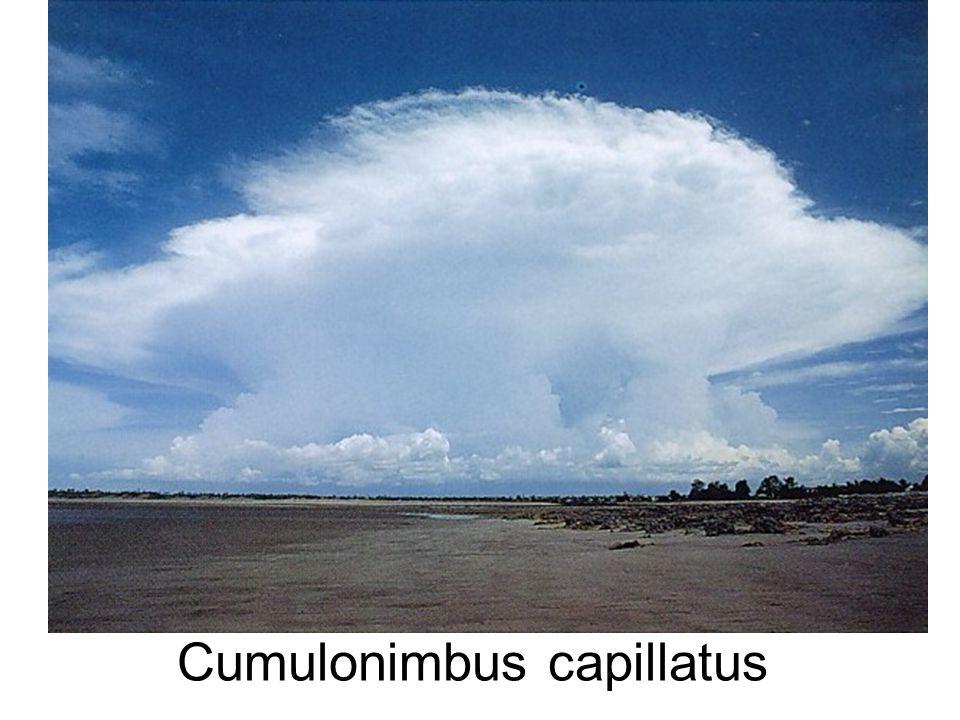 Cumulonimbus capillatus
