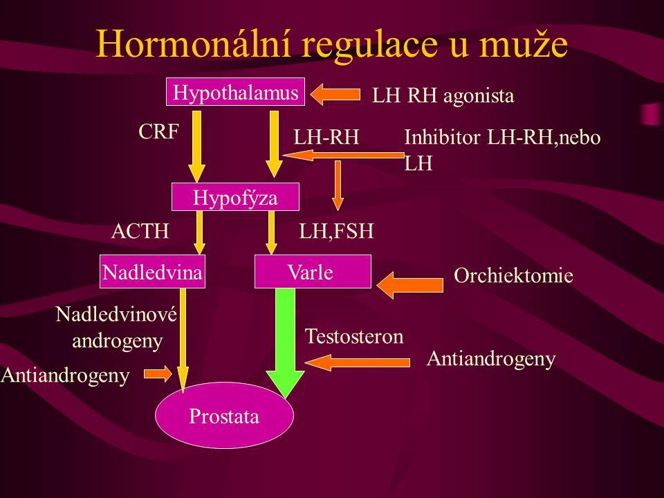 Hormonální regulace u muže