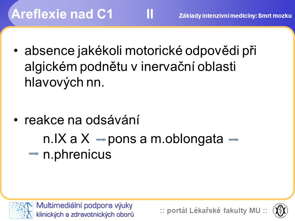 n.IX a X pons a m.oblongata n.phrenicus