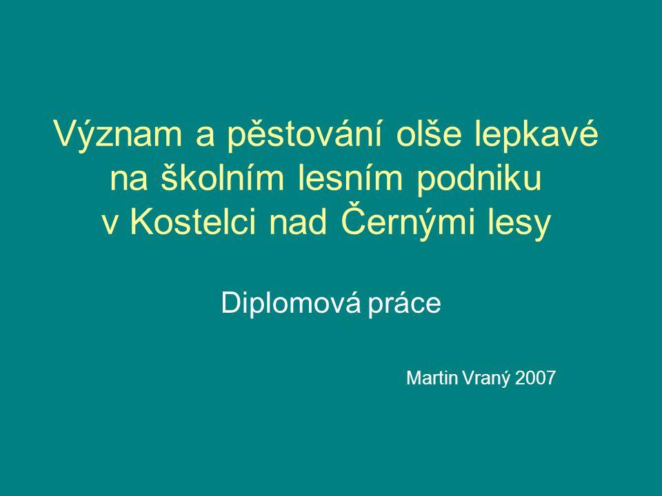 Diplomová práce Martin Vraný 2007