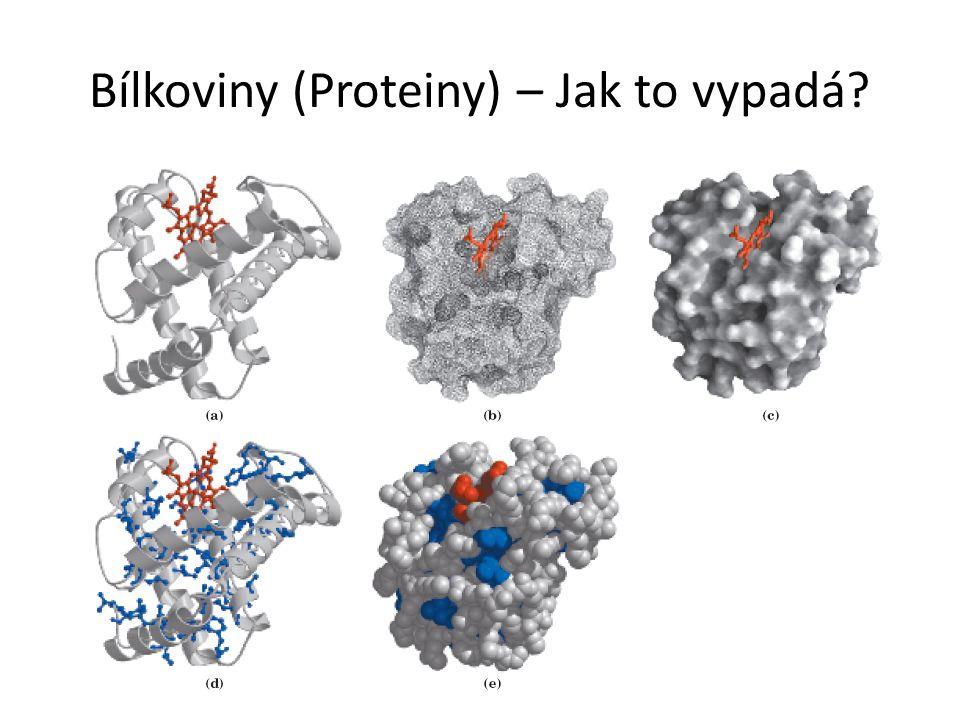 Bílkoviny (Proteiny) – Jak to vypadá