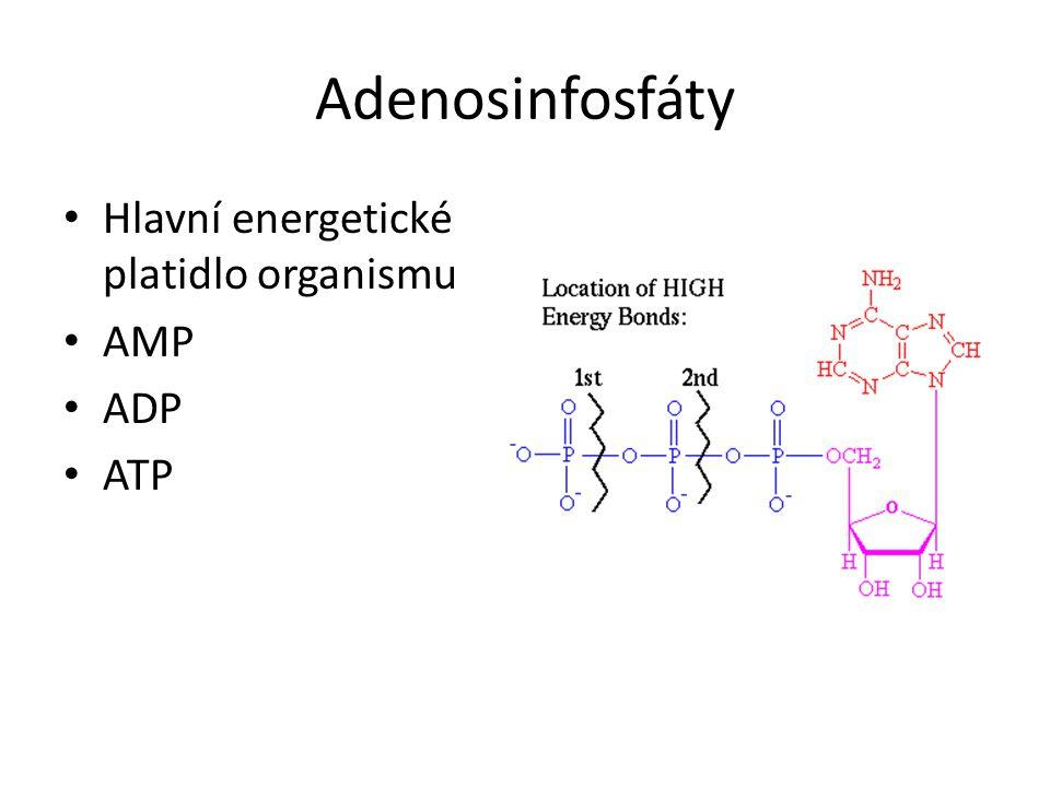 Adenosinfosfáty Hlavní energetické platidlo organismu AMP ADP ATP