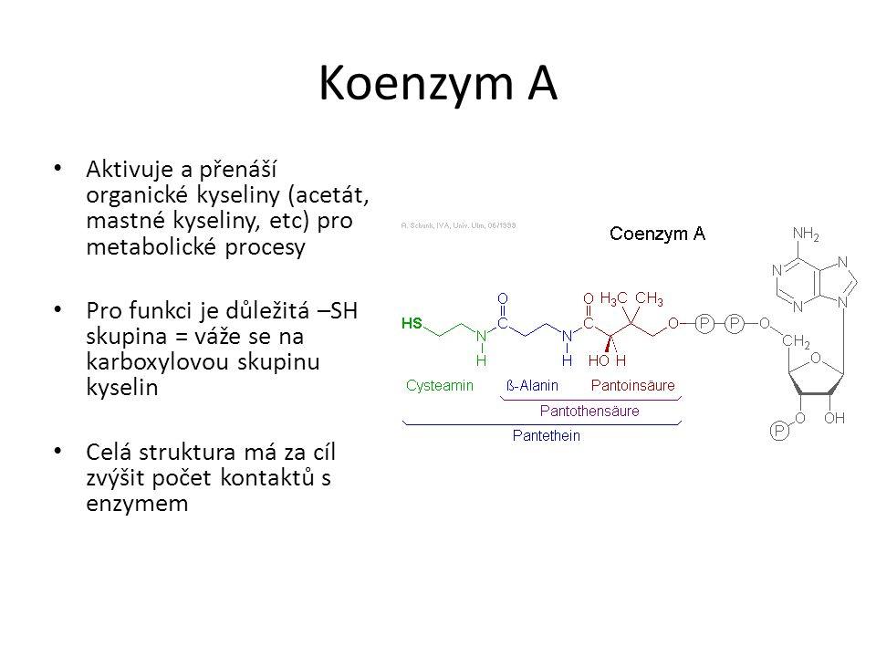 Koenzym A Aktivuje a přenáší organické kyseliny (acetát, mastné kyseliny, etc) pro metabolické procesy.