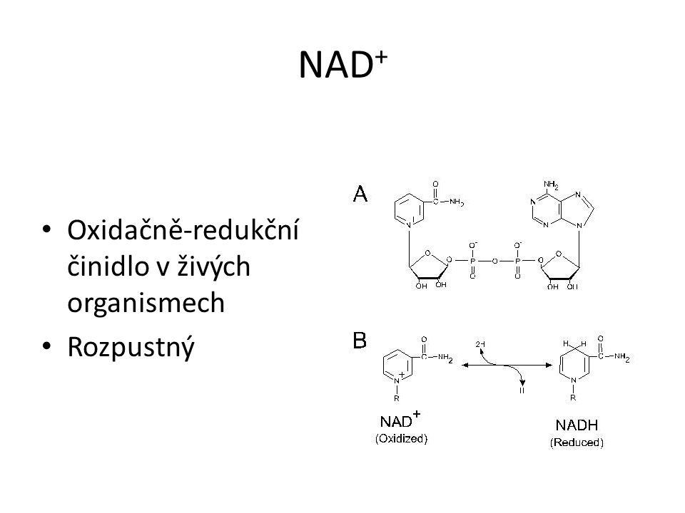NAD+ Oxidačně-redukční činidlo v živých organismech Rozpustný