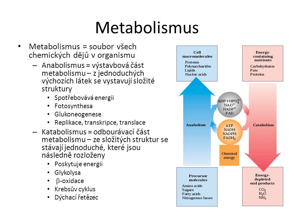 Metabolismus Metabolismus = soubor všech chemických dějů v organismu