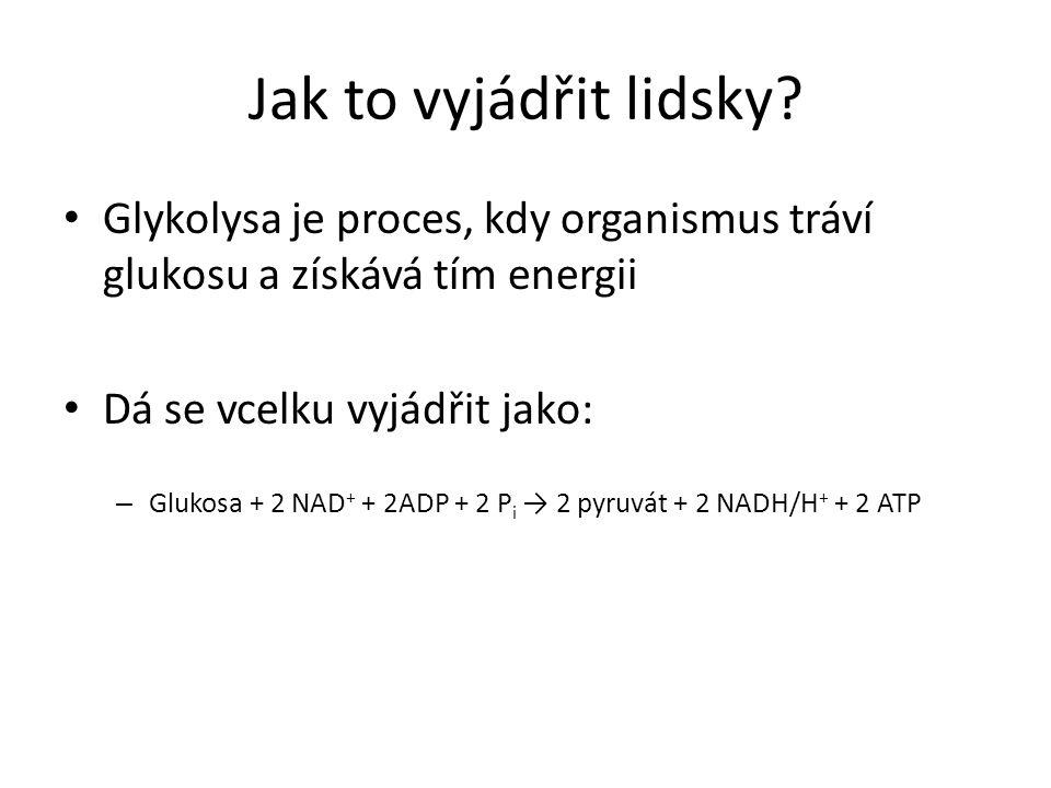 Jak to vyjádřit lidsky Glykolysa je proces, kdy organismus tráví glukosu a získává tím energii. Dá se vcelku vyjádřit jako: