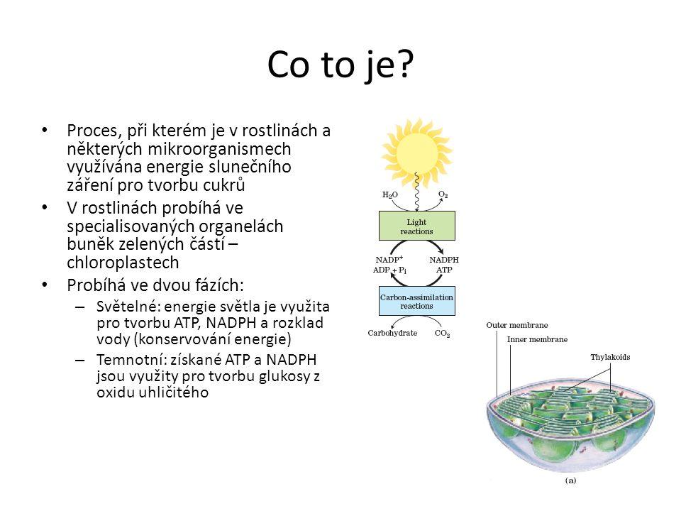 Co to je Proces, při kterém je v rostlinách a některých mikroorganismech využívána energie slunečního záření pro tvorbu cukrů.