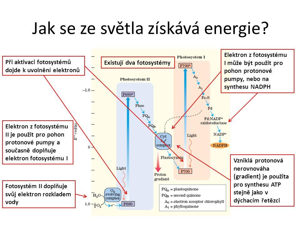 Jak se ze světla získává energie