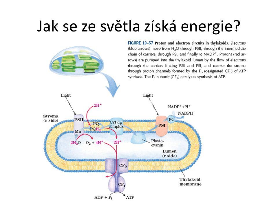 Jak se ze světla získá energie
