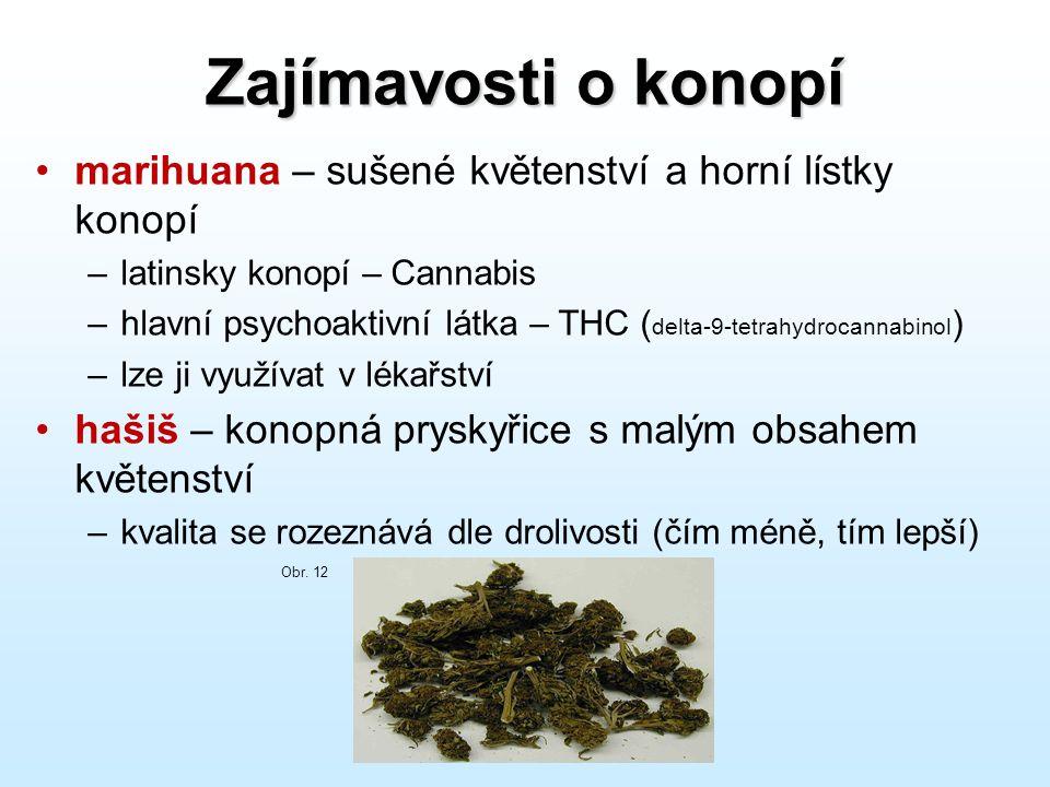 Zajímavosti o konopí marihuana – sušené květenství a horní lístky konopí. latinsky konopí – Cannabis.
