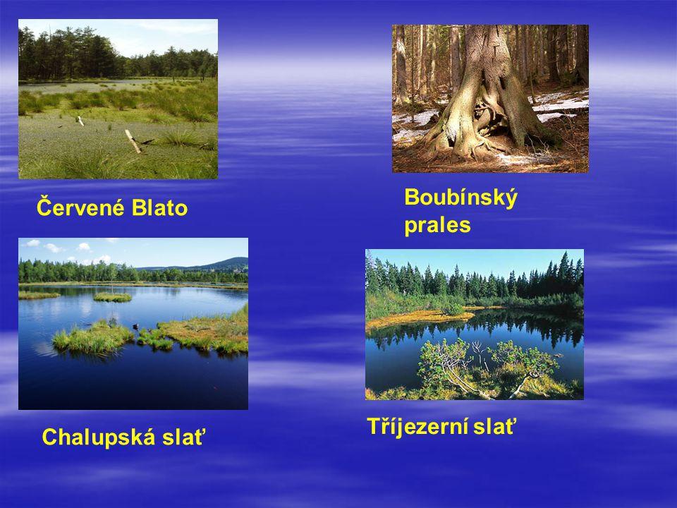 Boubínský prales Červené Blato Tříjezerní slať Chalupská slať