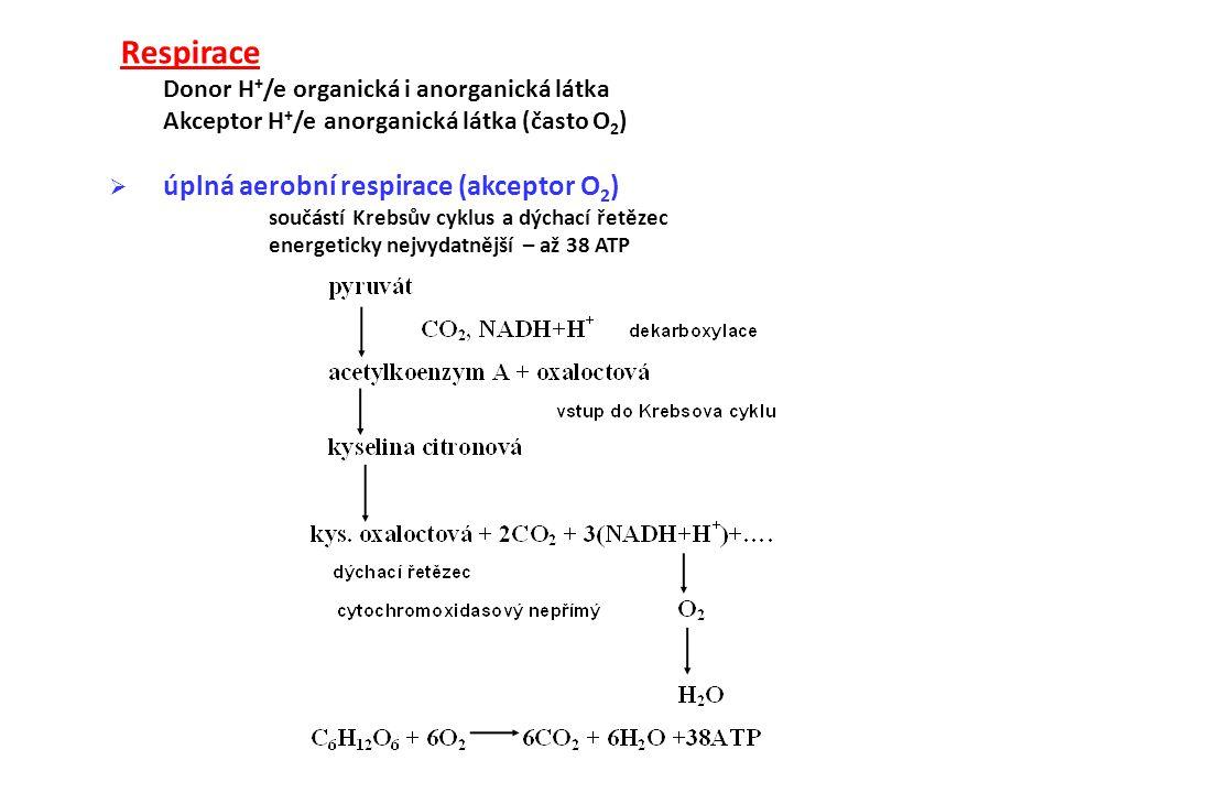 Respirace Donor H+/e organická i anorganická látka