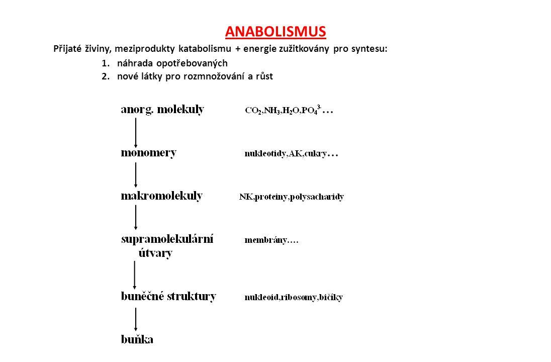 ANABOLISMUS Přijaté živiny, meziprodukty katabolismu + energie zužitkovány pro syntesu: 1. náhrada opotřebovaných.