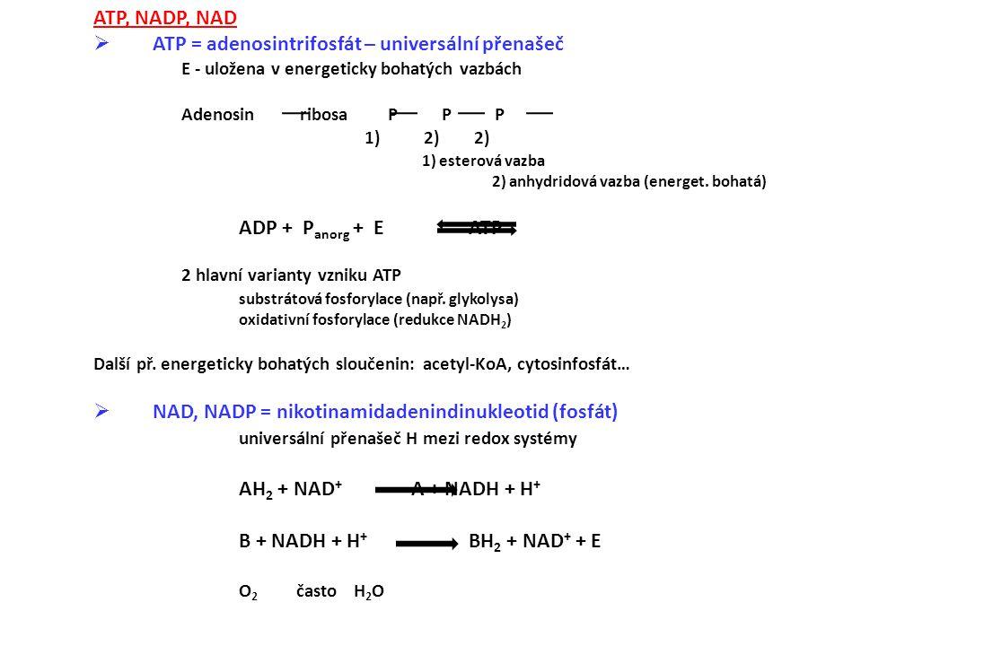 ATP = adenosintrifosfát – universální přenašeč