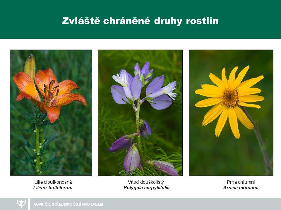 Zvláště chráněné druhy rostlin