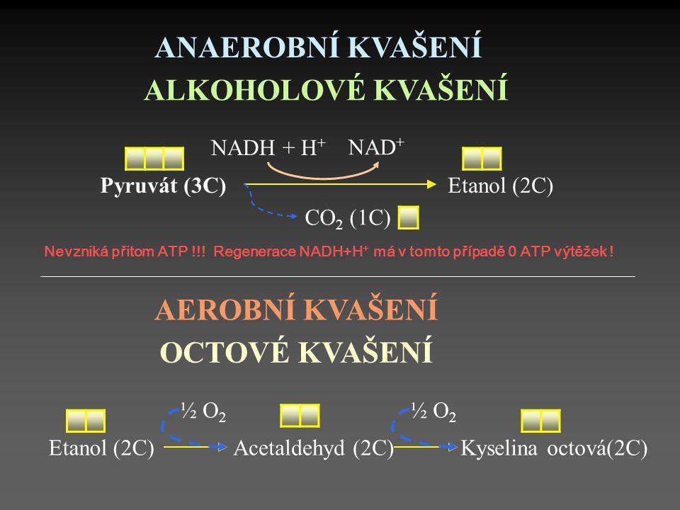 ANAEROBNÍ KVAŠENÍ ALKOHOLOVÉ KVAŠENÍ AEROBNÍ KVAŠENÍ OCTOVÉ KVAŠENÍ