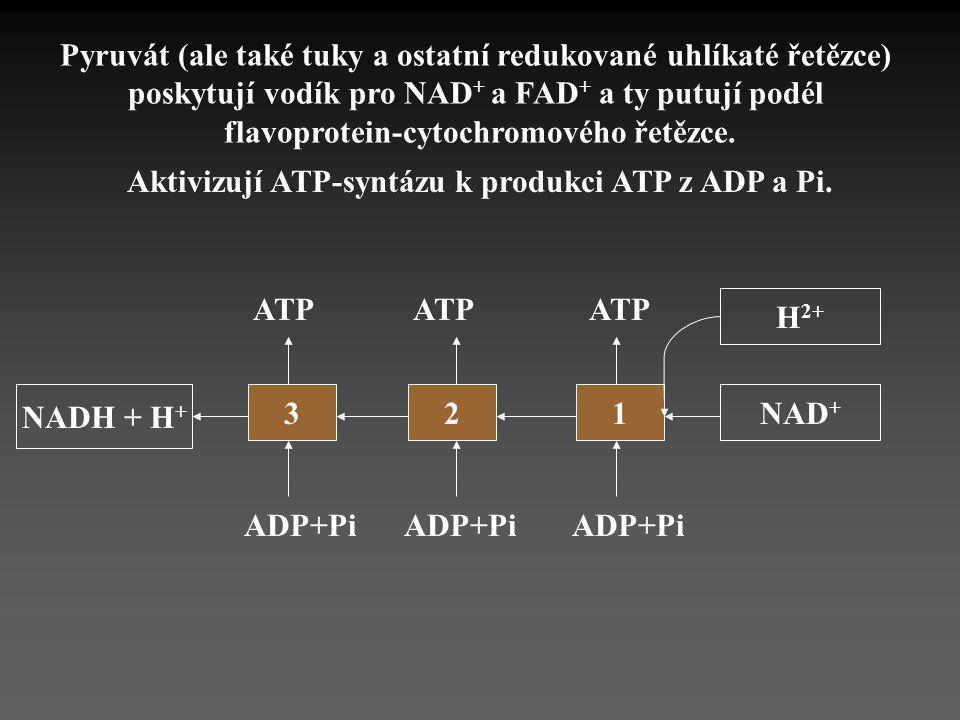 Pyruvát (ale také tuky a ostatní redukované uhlíkaté řetězce)