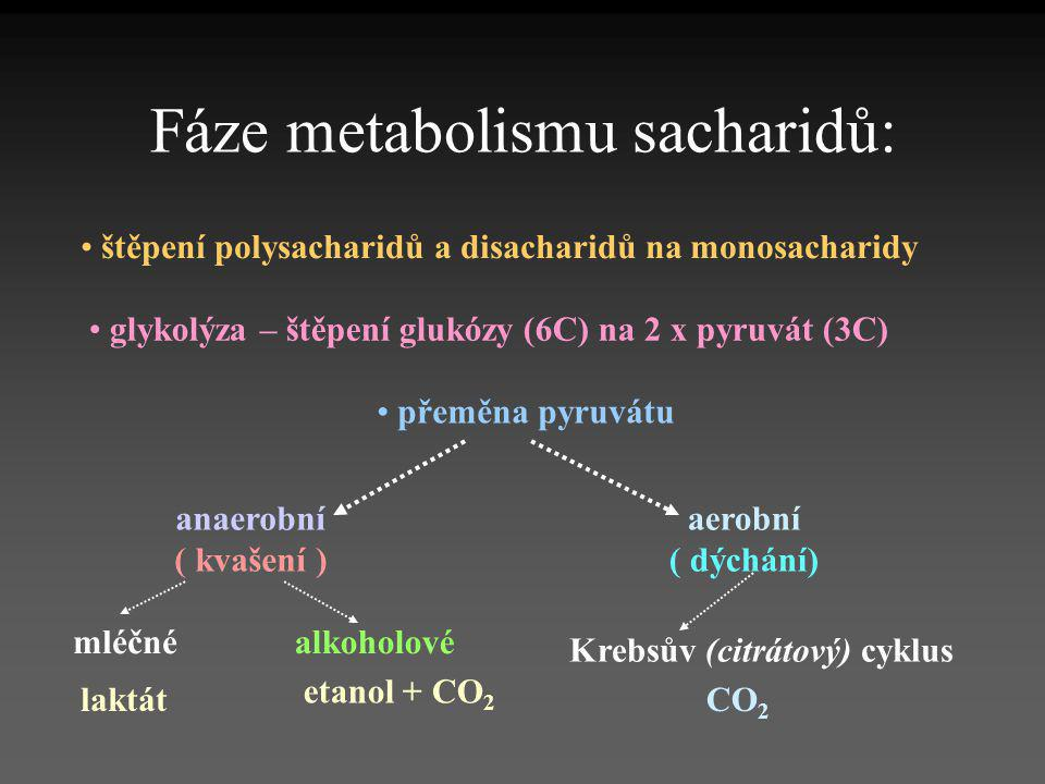 Fáze metabolismu sacharidů: