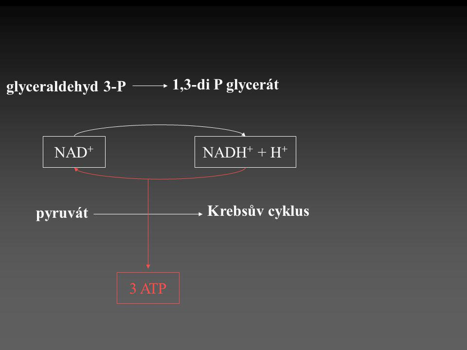 glyceraldehyd 3-P 1,3-di P glycerát NAD+ NADH+ + H+ Krebsův cyklus pyruvát 3 ATP