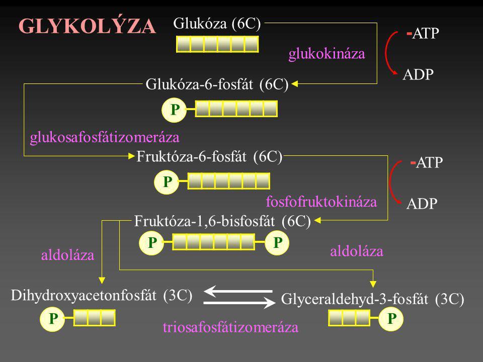 GLYKOLÝZA -ATP -ATP Glukóza (6C) ADP glukokináza Glukóza-6-fosfát (6C)