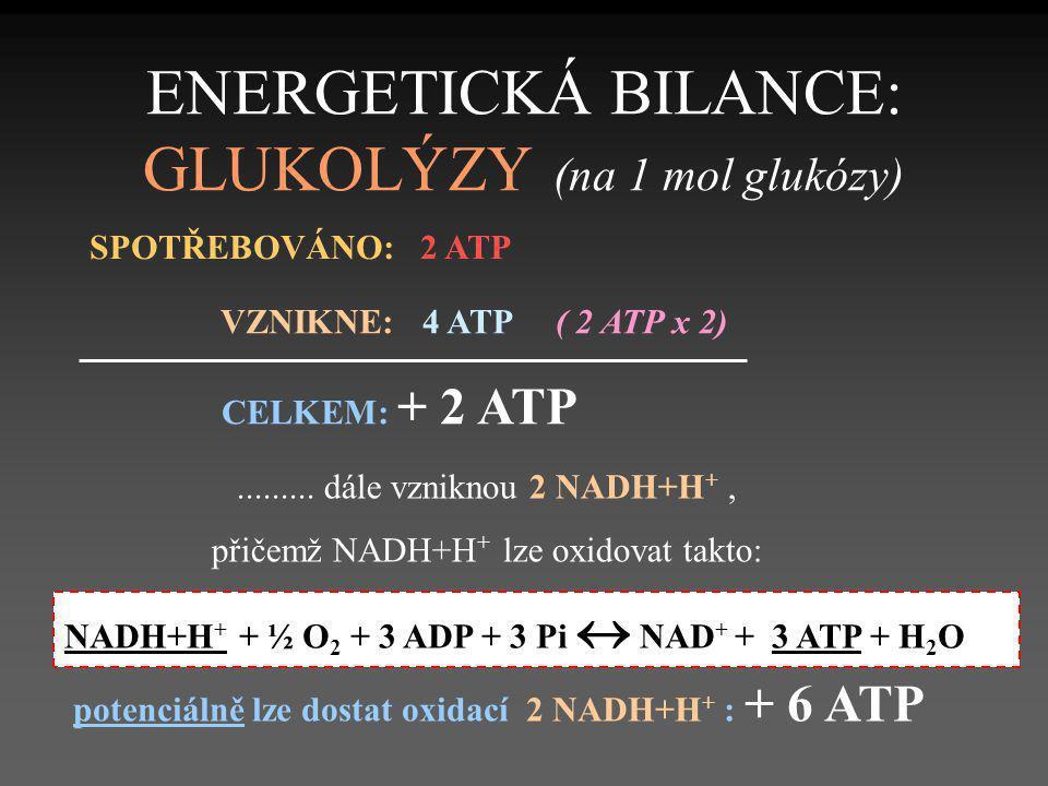 ENERGETICKÁ BILANCE: GLUKOLÝZY (na 1 mol glukózy)