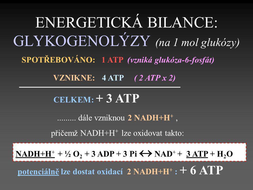 ENERGETICKÁ BILANCE: GLYKOGENOLÝZY (na 1 mol glukózy)