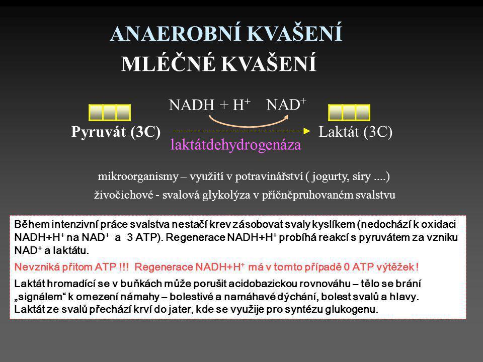 ANAEROBNÍ KVAŠENÍ MLÉČNÉ KVAŠENÍ NAD+ NADH + H+ Pyruvát (3C)