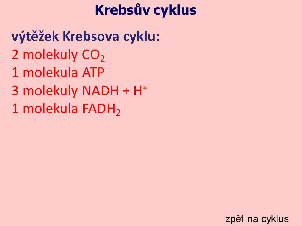 výtěžek Krebsova cyklu: 2 molekuly CO2 1 molekula ATP