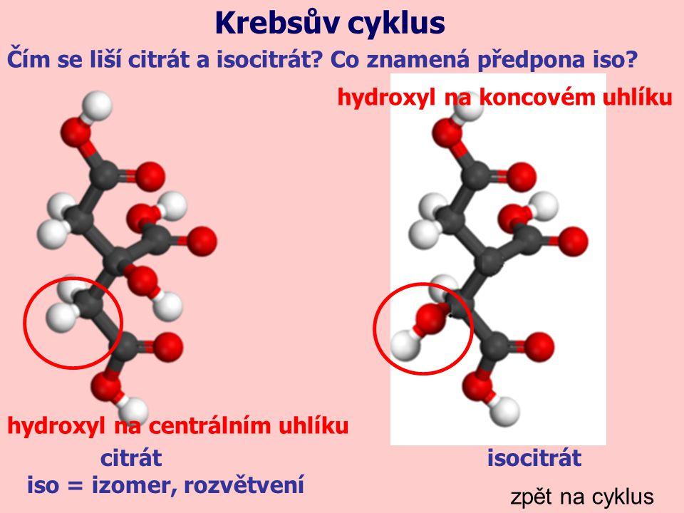 Krebsův cyklus Čím se liší citrát a isocitrát Co znamená předpona iso hydroxyl na koncovém uhlíku.