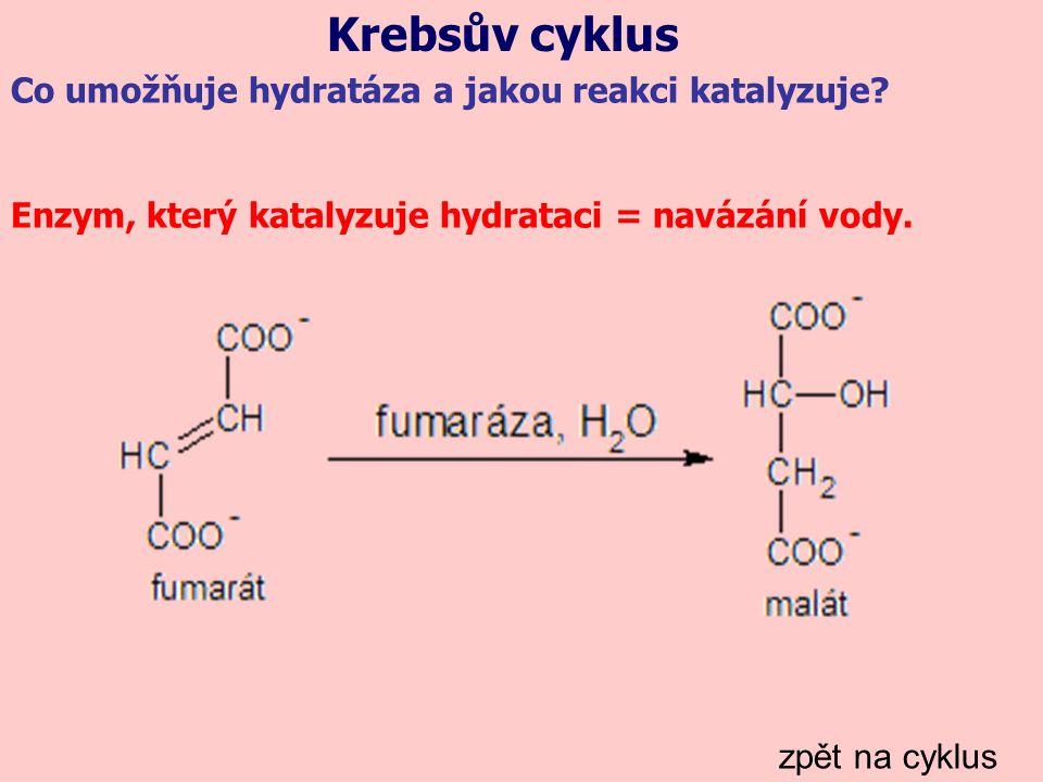 Krebsův cyklus Co umožňuje hydratáza a jakou reakci katalyzuje