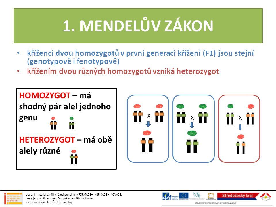 1. MENDELŮV ZÁKON HOMOZYGOT – má shodný pár alel jednoho genu