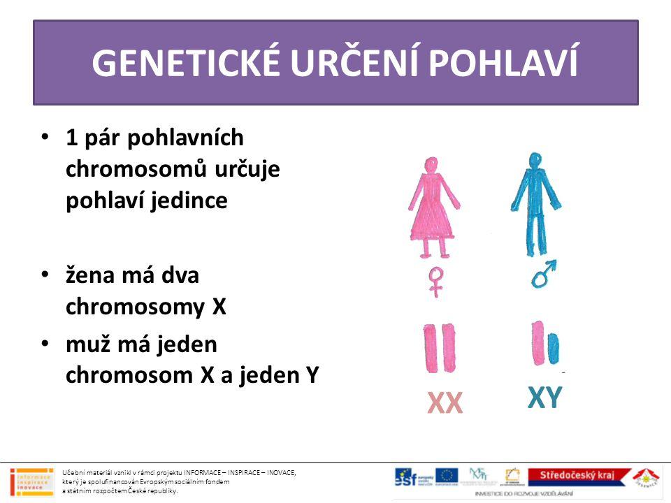 GENETICKÉ URČENÍ POHLAVÍ