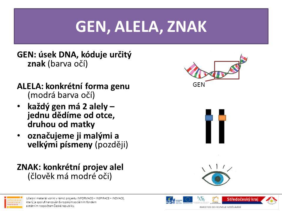 GEN, ALELA, ZNAK GEN: úsek DNA, kóduje určitý znak (barva očí)
