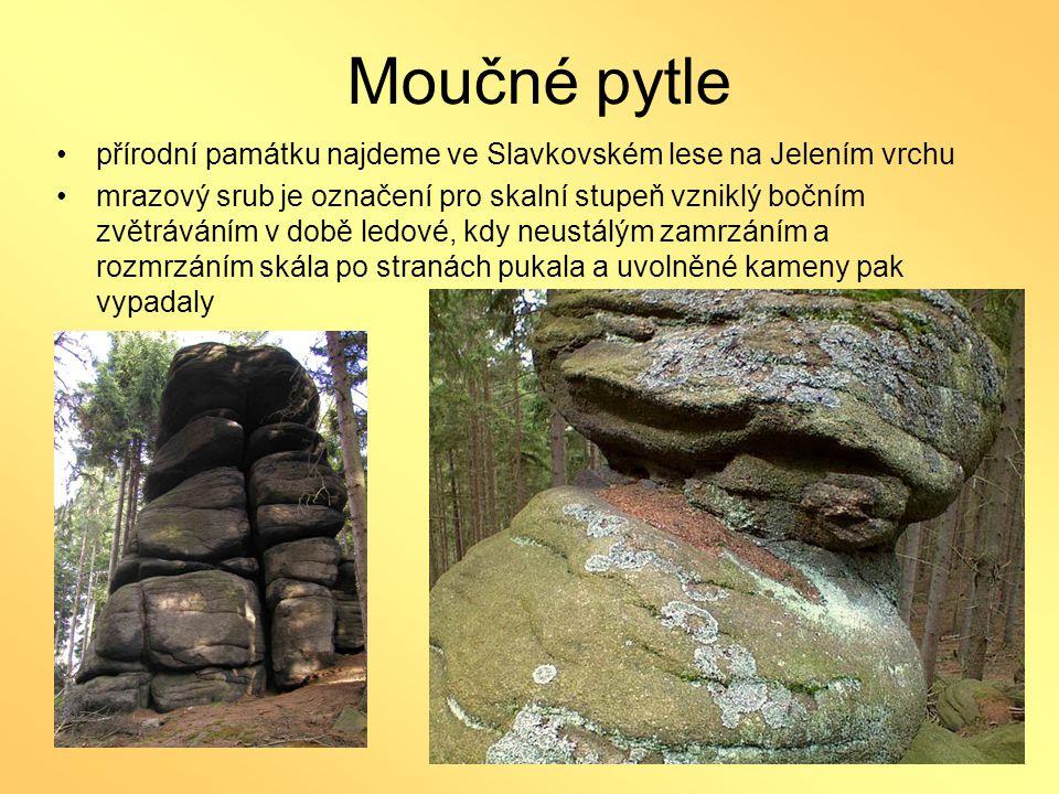 Moučné pytle přírodní památku najdeme ve Slavkovském lese na Jelením vrchu.