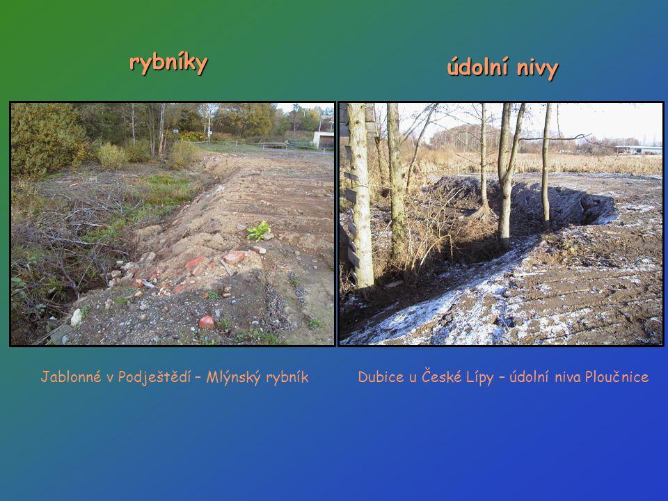 rybníky údolní nivy Jablonné v Podještědí – Mlýnský rybník