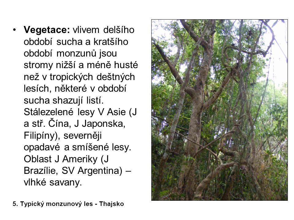 Oblast J Ameriky (J Brazílie, SV Argentina) – vlhké savany.