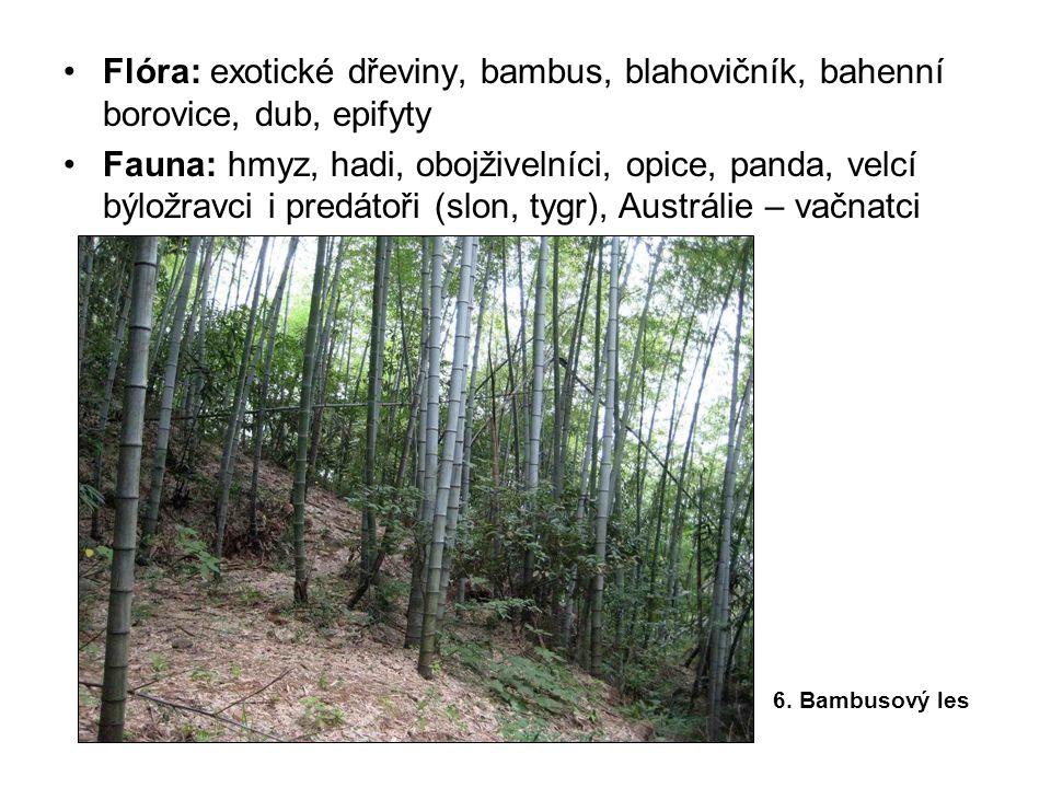 Flóra: exotické dřeviny, bambus, blahovičník, bahenní borovice, dub, epifyty