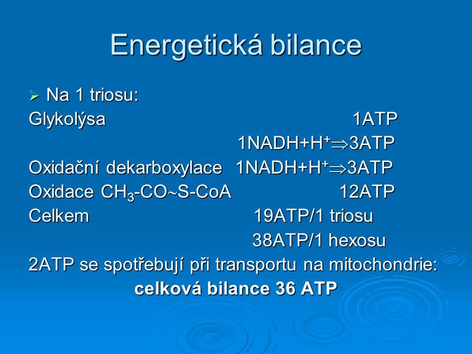 Energetická bilance Na 1 triosu: Glykolýsa 1ATP 1NADH+H+3ATP