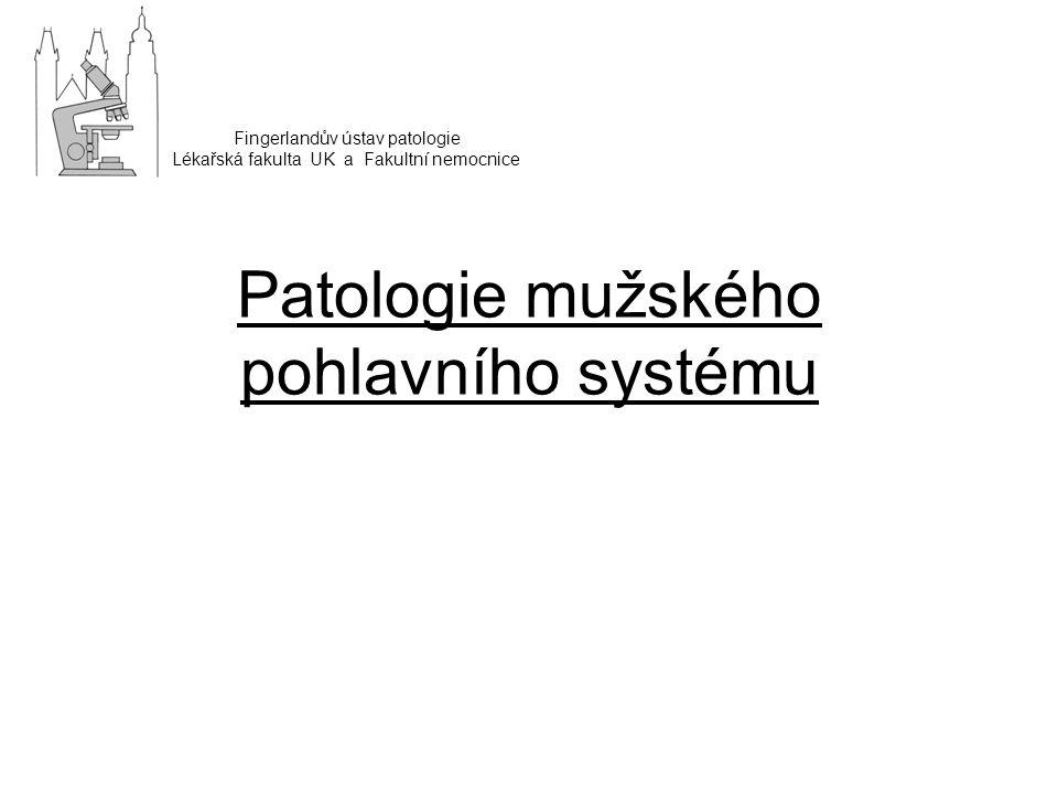 Patologie mužského pohlavního systému