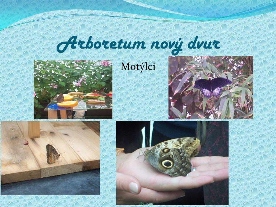 Arboretum nový dvur Motýlci
